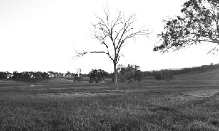 Black and white image of tree in open field.