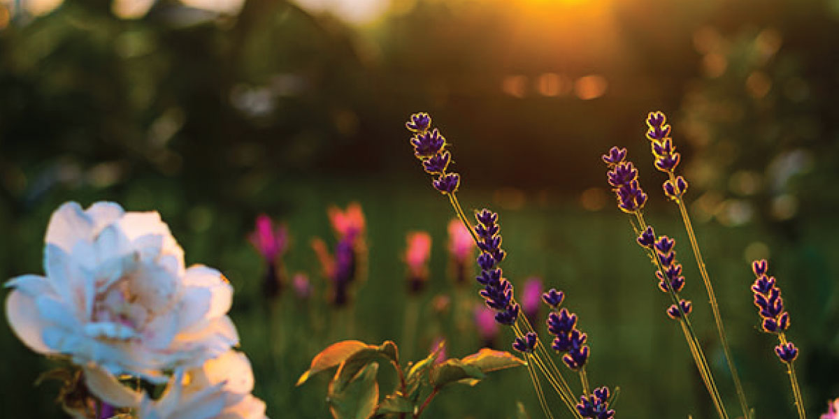 Redbank North Richmond- Top 5 Landscaping and Gardening Tips for Winter
